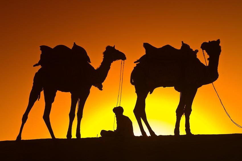 Camellos en la sombra