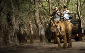 Tigres de India en Ranthambore