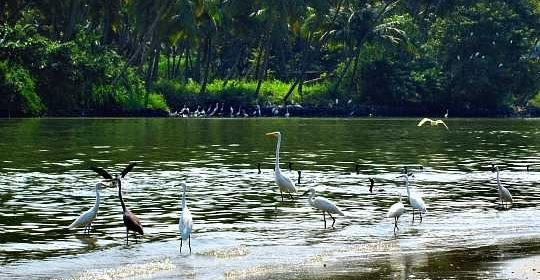 aves migratorias kerala